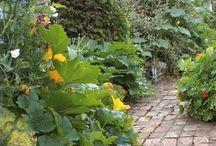 The Vege Garden / by Katherine Fender