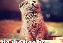 Cats, and Other Cuties / by Gabrielle Meyer