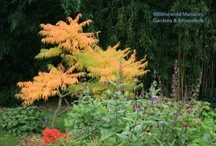 Trees and Shrubs / by Blithewold Mansion, Gardens & Arboretum
