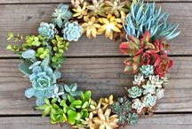 succulents / by Melissa Newman