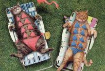 here kitty kitty :)  / by Darlene Valladolid
