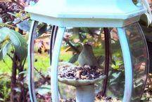 Bird feeders / by Judy Beam