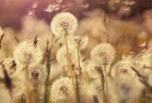 nature / by Watch IItt