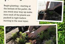 Jardines y plantas / by Rebeca Pertiñez