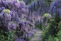 Flowers / by Lizz Morgan