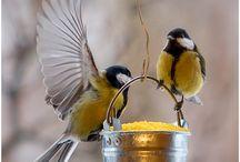 Birds / by Sheri Adamez