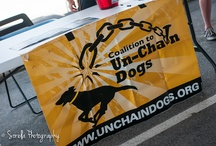 2013 Charity Dog Wash Event / We raised $800 for The Coalition To Unchain Dogs here in Durham, NC / by ThunderShirt