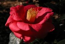 Blooms. / by BhamBotanicalGardens