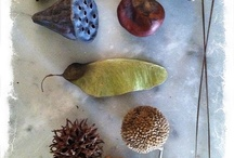 Bundles&Collections&Groupings / by Marjolijn Kerkhof