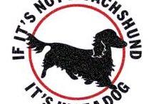 daucshounds / by Carol Chapman
