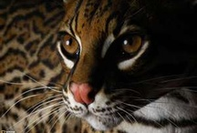 Fabulous Felines >^..^< Super-sized / by Maggie Ward