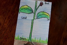 Growth and Changes in Plants- Grade 3 Science / by Janelle Wood-0'Grady