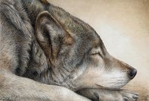 Colored Pencil Animals / by Sammie Justesen