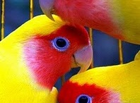 Birds of a Feather / by LawyerMarketer
