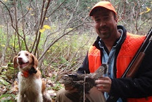 Upland Bird Hunting / Grouse and Woodcock Hunting in Pittsburg NH. / by Cabins at Lopstick
