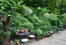 Garden party. / by Mad Katigan.