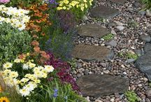 Yard Inspiration / by Liz Landrum