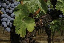 Wines of Turkey / by EWBC 2012