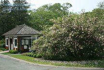 The Rose Garden / by Blithewold Mansion, Gardens & Arboretum