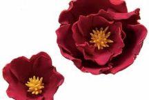 gum paste flowers/tutorials / by Jackie Mrosko