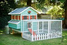 Chicken Coop Idea's / by Shauna | The Best Blog Recipes