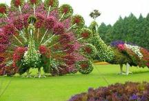 Topiary & Wood Sculptures / by Deborah Merrill Williams