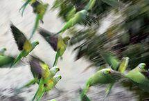 Aves / by Gilberto Pereira Junior