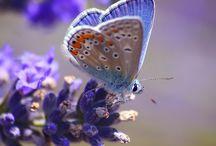 Butterflies / by Kelly Hinson