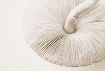 colour : white purity / by Niki Stylianou