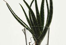 Plantas Medicinales / by Kat Bön