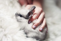 Animals I must have / by Alison Kouba
