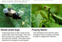 Insects Work For You / Part of good gardening and working with nature is attracting beneficial insects to pollinate your plants and/or to rid your garden of bad insects.  Some beneficial insects acting as predators means you do not have to spray with insecticides. #pestcontrol #pollination / by Permaculture Lifestyles