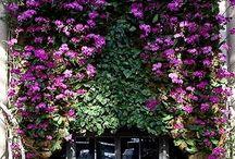 Gardenesque / by Jane Shine