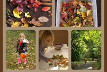 Fall / by Jill Kneib