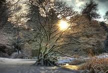 Winter Wonderland / by Aldona Kozlowska