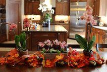Orchids / by MyFavoriteFlowers.com Olga Goddard