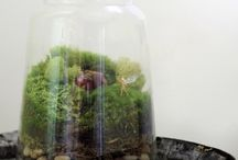 Flora / Planties and floral design  / by Morgan Jacobs