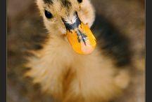 I love animals / by Kelly Edmond-Boyer