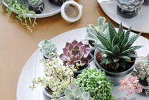 Succulents / by Jayne Ferguson
