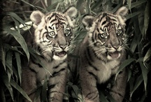 Animals♥♥ / animals are so great my fav is a tiger but I love all kinds / by Sherri Noel