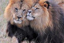 Unconditional Love <3 / by PrideRock Wildlife Refuge