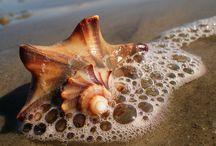 I love the beach / by Jennifer Jordan Elgaaen