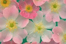 Flowers / by Tina Connor