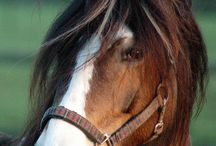 Equus / by Sarah Reidinger