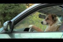 Dog TV Commercials / by Pam's Dog Academy