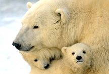 polar bears and puppy dogs / by Rebecca B