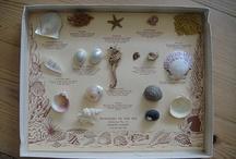 shells / by beachcomber