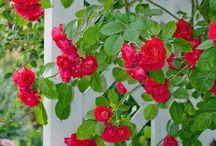 Gardening / by Virginia Walker