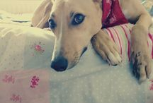 Lovely lurchers / by Selene Paxton-Brooks