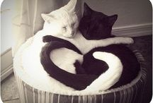 Cats <3 / by Marlleen